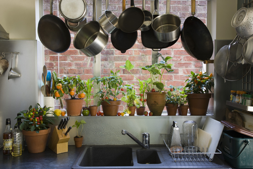 Your Guide to a Greener Kitchen