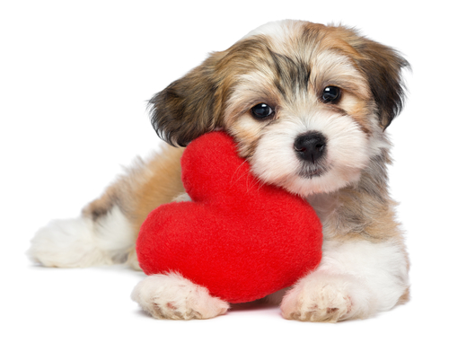 Being a Pet Owner May Benefit Your Cardiac Health
