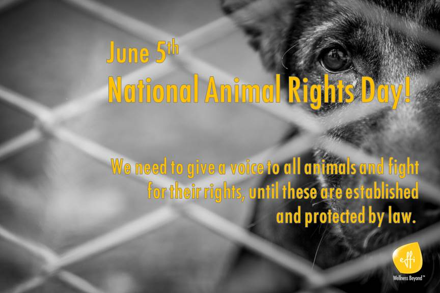The National Animal Rights Day: top 12 animal rescue organizations & sanctuaries
